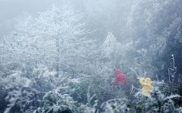 Miền Bắc chuẩn bị đón đợt rét đậm rét hại diện rộng đầu tiên của mùa đông, Hà Nội ban ngày không quá 12 độ