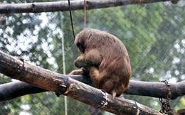"""Ảnh: Động vật tại vườn bách thú Thủ Lệ co ro, ủ rũ trong cái lạnh """"thấu xương"""" ở Thủ Đô"""