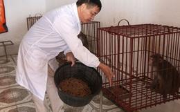 12 chú khỉ thử nghiệm vaccine Covid-19 có gì đặc biệt?