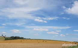 Trang trại rộng đến 60 hecta với đủ loại trái cây chín mọng trĩu cành, cánh đồng lúa mì đẹp như trong phim của mẹ Việt ở Pháp