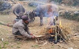Hà Giang rét tê tái, người dân nổi lửa sưởi ấm cho gia súc