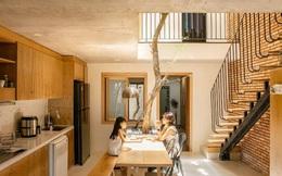 Độc đáo căn nhà ngăn đôi của mẹ đơn thân tại Đà Nẵng: Xanh mát nhờ cây và 2 giếng trời, ở một nửa, nửa còn lại cho thuê homestay