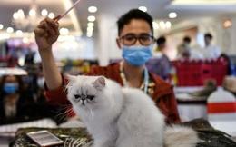 Nghiên cứu: SARS-CoV-2 có thể lây nhiễm trên mèo, các vật nuôi khác như chó, lợn, gà và vịt không bị nhiễm bệnh