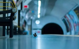 Vắng bóng con người do lệnh phong tỏa giữa dịch Covid-19, chuột nhắt lôi nhau ra sân ga tàu để 'đánh lộn'