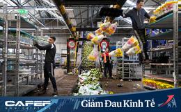 Buộc phải tiêu huỷ 140 triệu bông hoa tulip do Covid-19, từ nông dân cho đến ông chủ công ty sản xuất hoa lớn nhất Hà Lan đều đứng nhìn với sự bất lực