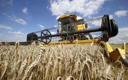 Châu Âu kêu gọi 'đội quân bóng tối' giải cứu cánh đồng không người thu hoạch