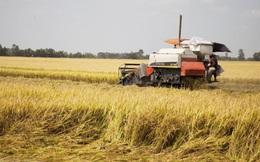 Thủ tướng yêu cầu làm rõ tin đồn có tiêu cực, trục lợi trong xuất khẩu gạo
