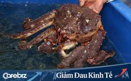 Chuỗi Co.opmart, Co.opXtra giảm giá 3.400 mặt hàng, bào ngư Hàn Quốc sống còn 1.200.000 đ/kg, cua king crab sống giá 1.750.000 đ/kg