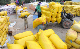 Bộ Công Thương kiến nghị xuất khẩu gạo trở lại bình thường từ 1-5