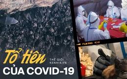 """Chuyện về """"biệt đội săn dơi"""": Những người liều mạng với virus chết chóc nhất bậc nhất, phát hiện 'tổ tiên' của Covid-19 từ nhiều năm trước"""