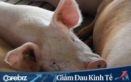 Các tỷ phú thịt lợn Trung Quốc kiếm bộn tiền trong 2 tháng qua
