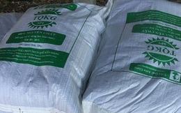 Bỏ công ty nước ngoài, 9x khởi nghiệp thành công nhờ nuôi trùn quế