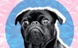 FDA Hoa Kỳ: Chó mèo giờ cũng cần phải cách ly xã hội, nhưng mục đích không phải như chúng ta nghĩ