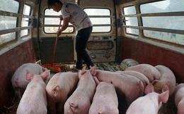 Hậu tả lợn châu Phi, nông dân Trung Quốc lại khốn đốn vì giá đậu tương