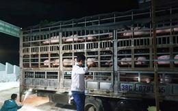 Lô lợn giống đầu tiên nhập khẩu từ Thái Lan đã về đến Việt Nam