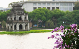 Ảnh, clip: Hoa bằng lăng nhuộm tím phố phường Hà Nội tháng 5