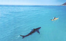 Thời cá mập lùng sục săn mồi: Nỗi lo mới của doanh nghiệp Việt Nam hậu Covid-19