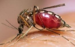 Virus Zika xuất hiện ở Đà Nẵng: Dấu hiệu lây nhiễm và cách phòng ngừa