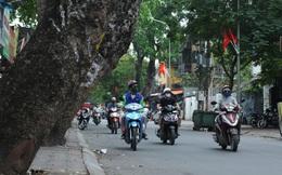Ảnh: Cận cảnh hàng loạt cây xanh mục gốc, ngả hướng ra giữa đường ở Hà Nội