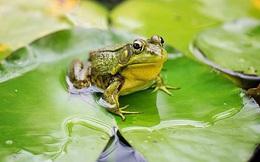 Có 5 con ếch trên 1 cái lá hoa súng, 1 con quyết định nhảy, hỏi còn lại bao nhiêu con?