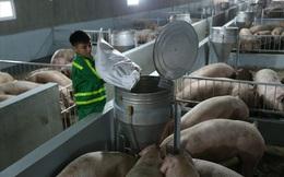 Nhập lợn sống từ Thái, giá thịt sẽ giảm?