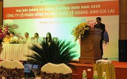 ĐHĐCĐ HAGL Agrico (HNG): Kỳ vọng nhiều vào dứa, có kế hoạch dùng 2.000ha đất cho dự án điện mặt trời