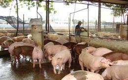 Dịch tả lợn châu Phi tái phát, cả nước tiêu hủy 34 nghìn lợn bệnh