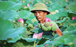 Cách Hà Nội chừng 50 cây số, có một ngôi làng người người bỏ nghề công nhân về quê kiếm tiền triệu nhờ loài hoa đặc trưng này