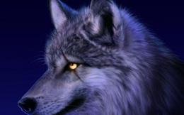 Chấp nhận là sói đơn độc trên con đường mình chọn còn hơn là sống an phận làm hài lòng người khác: Một đời rất ngắn, đừng ngại trở nên khác biệt