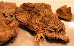 Bí mật bất ngờ được hé lộ từ... cục phân 14.000 năm tuổi: Cuối cùng một trong những bí ẩn lớn nhất của loài người đã được giải đáp