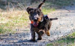 Tại sao chó đi chơi luôn biết đường về nhà? Nghiên cứu mới cho thấy chúng định vị được phương hướng bằng từ trường Trái Đất