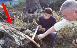 Mang khúc gỗ xấu xí về vứt ở góc vườn, 5 năm sau người đàn ông choáng váng phát hiện đó là cả gia tài trị giá 66 tỷ đồng