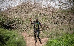 """Chùm ảnh rợn người về đại dịch châu chấu đang hoành hành ở châu Phi: """"Binh đoàn"""" nghìn tỷ con châu chấu với sức ăn bằng 35.000 người/ngày bay kín trời"""