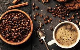 Hành trình của hạt cà phê từ vườn trồng đến tách cà phê thơm lừng mỗi sáng