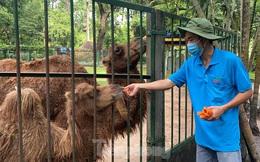 Người dân TPHCM góp hàng tấn rau củ quả 'cứu đói' bầy thú Thảo Cầm Viên mùa dịch COVID-19