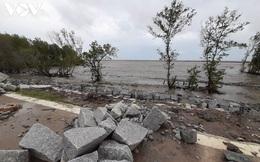 Nguy cơ vỡ đê biển Cà Mau, đề xuất ban bố tình huống khẩn cấp
