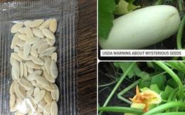 """Chưa kịp cảnh báo, nông dân Mỹ đã trồng thử hạt giống bí ẩn từ Trung Quốc và kết quả chúng mọc... """"như điên"""""""