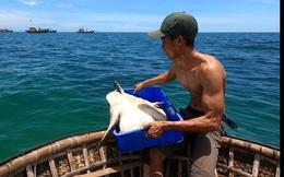 Thanh niên xứ Quảng trộm 18kg 'mồi nhậu' của cha thả xuống biển