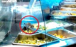 Aeon xin lỗi vì chuột bò trên khay thức ăn tại Aeon Tân Phú