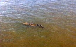 TP.HCM: Cảnh báo cá sấu xuất hiện trên sông Sài Gòn