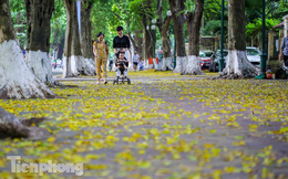 Lá phủ vàng con phố trong tiết trời chuyển sang thu ở Hà Nội