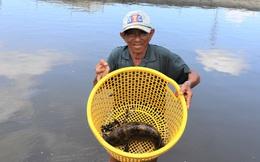 Ông nông dân nuôi loài cá đặc sản, mỗi con lãi tới 150.000 đồng