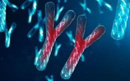 """Nam giới có thể sẽ """"tuyệt chủng"""" vì nhiễm sắc thể Y đang dần biến mất?"""