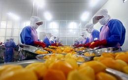 Người Nhật có hẳn viện nghiên cứu về củ khoai lang và bài toán chỉ 5% rau quả được chế biến của Việt Nam