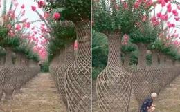 Những bình hoa khổng lồ, rực rỡ được đặt ngoài trời khiến dân mạng trầm trồ không ngớt, nhìn kỹ mới thấy hóa ra là kỹ thuật uốn cây cực siêu đẳng