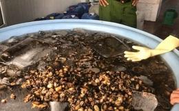 Chủ cơ sở khai lý do dùng hóa chất để ngâm thịt ốc trước khi bán cho tiệm ăn, chợ, siêu thị