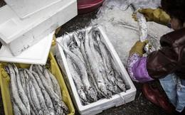 Nguy cơ chuỗi cung ứng toàn cầu đứt đoạn từ những thùng cá đông lạnh chất đống ở Trung Quốc