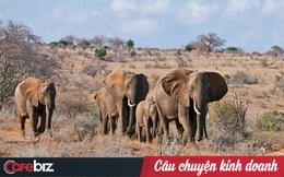 13 năm, có hơn 9.500 con tê giác, 35.000 con voi và 100.000 tê tê bị giết, USAID kêu gọi: Ngưng tạo nghiệp! Tích thiện chung tay hồi sinh sự sống cho voi, tê tê