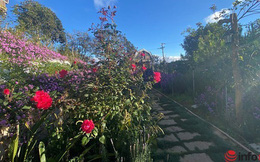 Mua đất làm nhà vườn đẹp, sinh lời 'ăn nhau' ở điểm này, chia sẻ của một ông chủ thành công nhiều năm