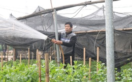 Người trồng hoa, buôn hoa Tết lo ế vì dịch COVID-19